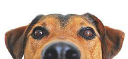 Hunde-Pfote Anhänger mit Gravur